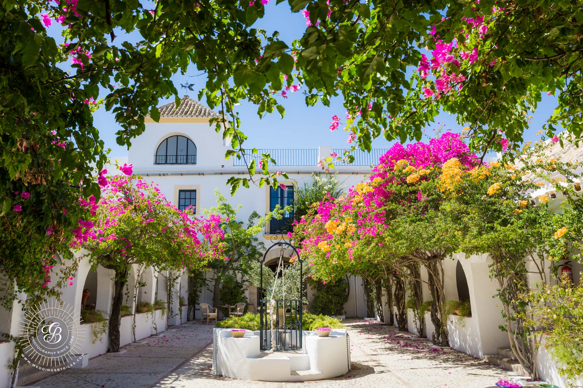 bougainville in the courtyard at hacienda de san rafael