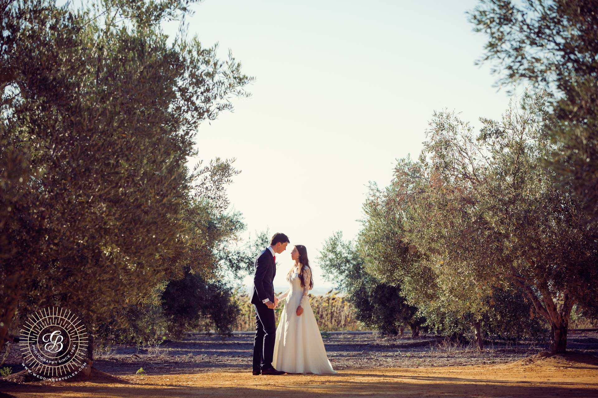 bride and groom in olive grove, Spain