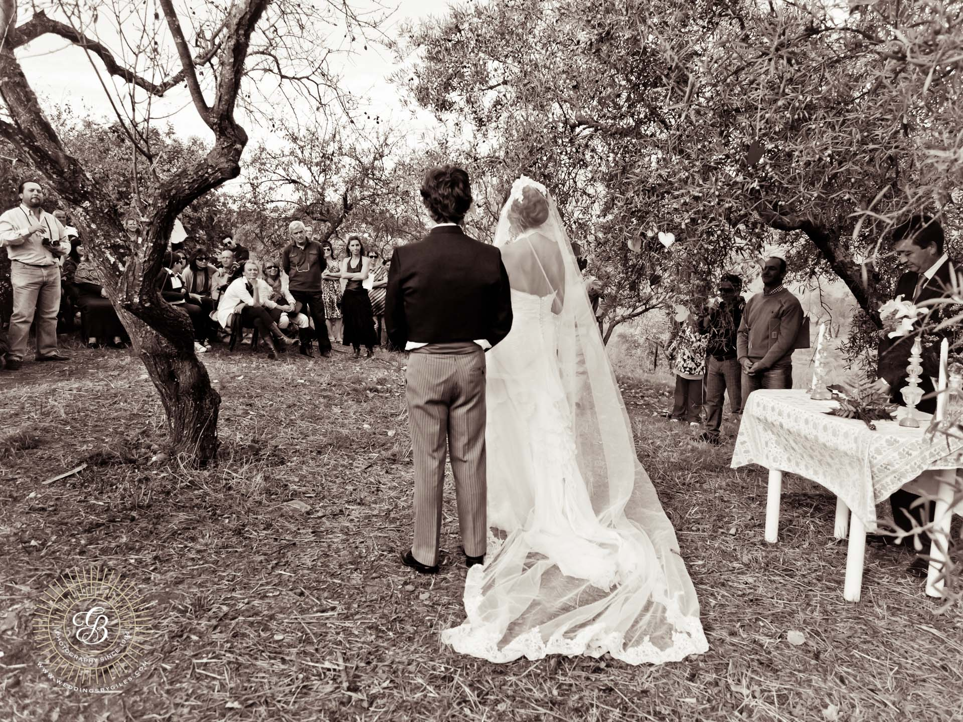Wedding andalucian Olive grove