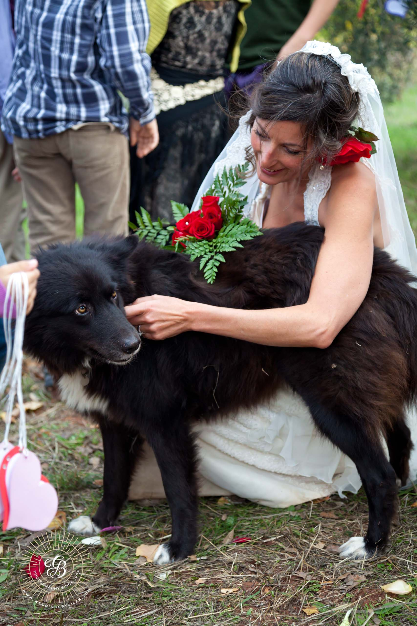 four legged wedding guest