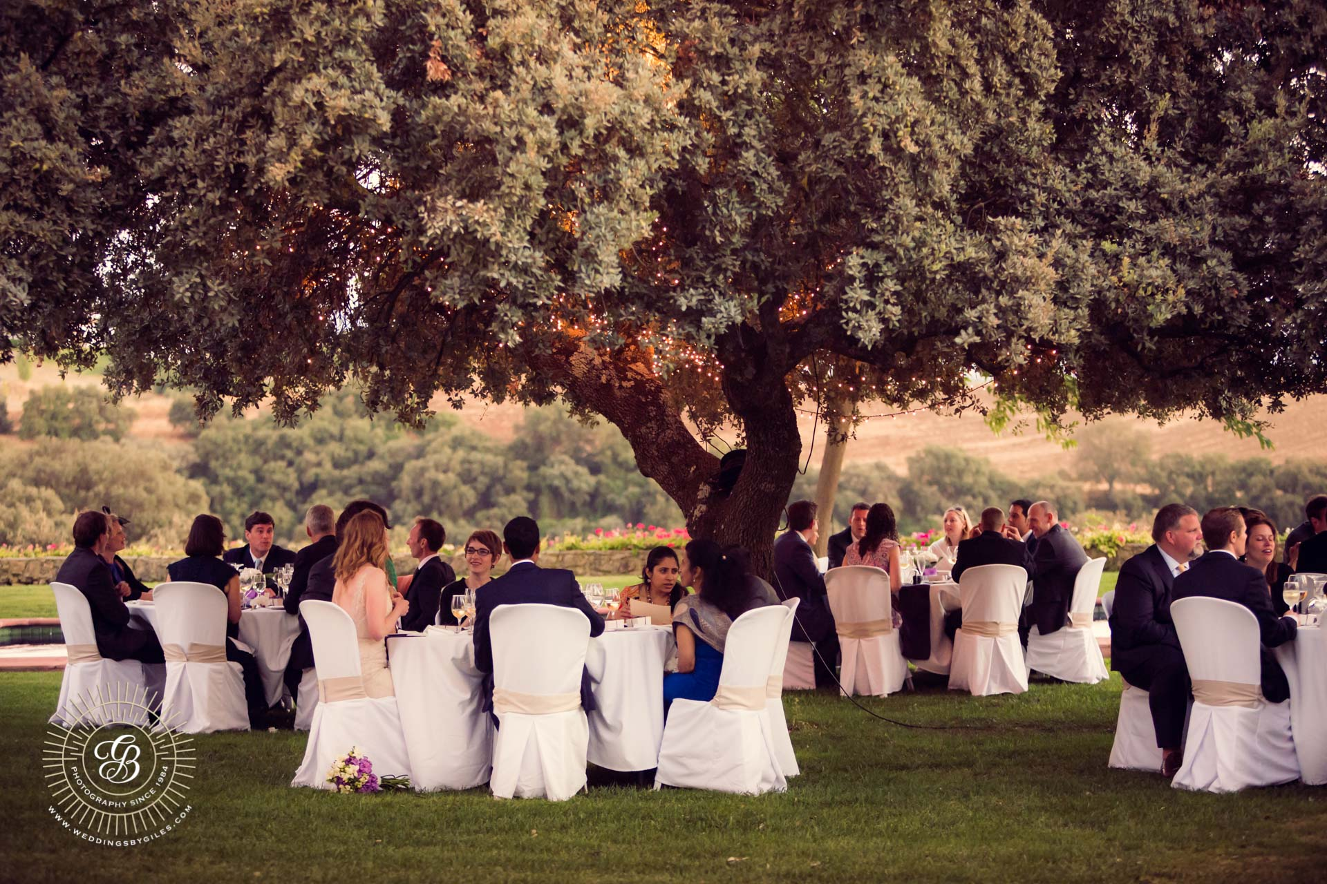wedding dinner under a tree in spain