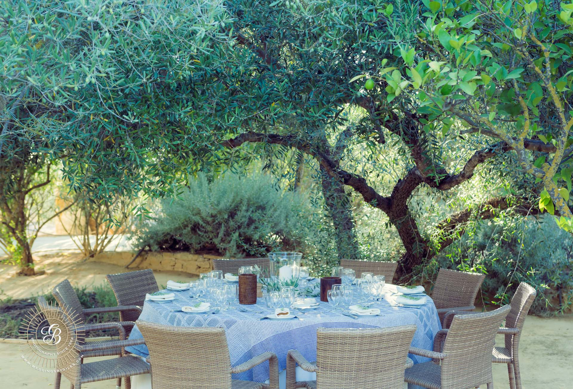 table setting in olive grove in spain