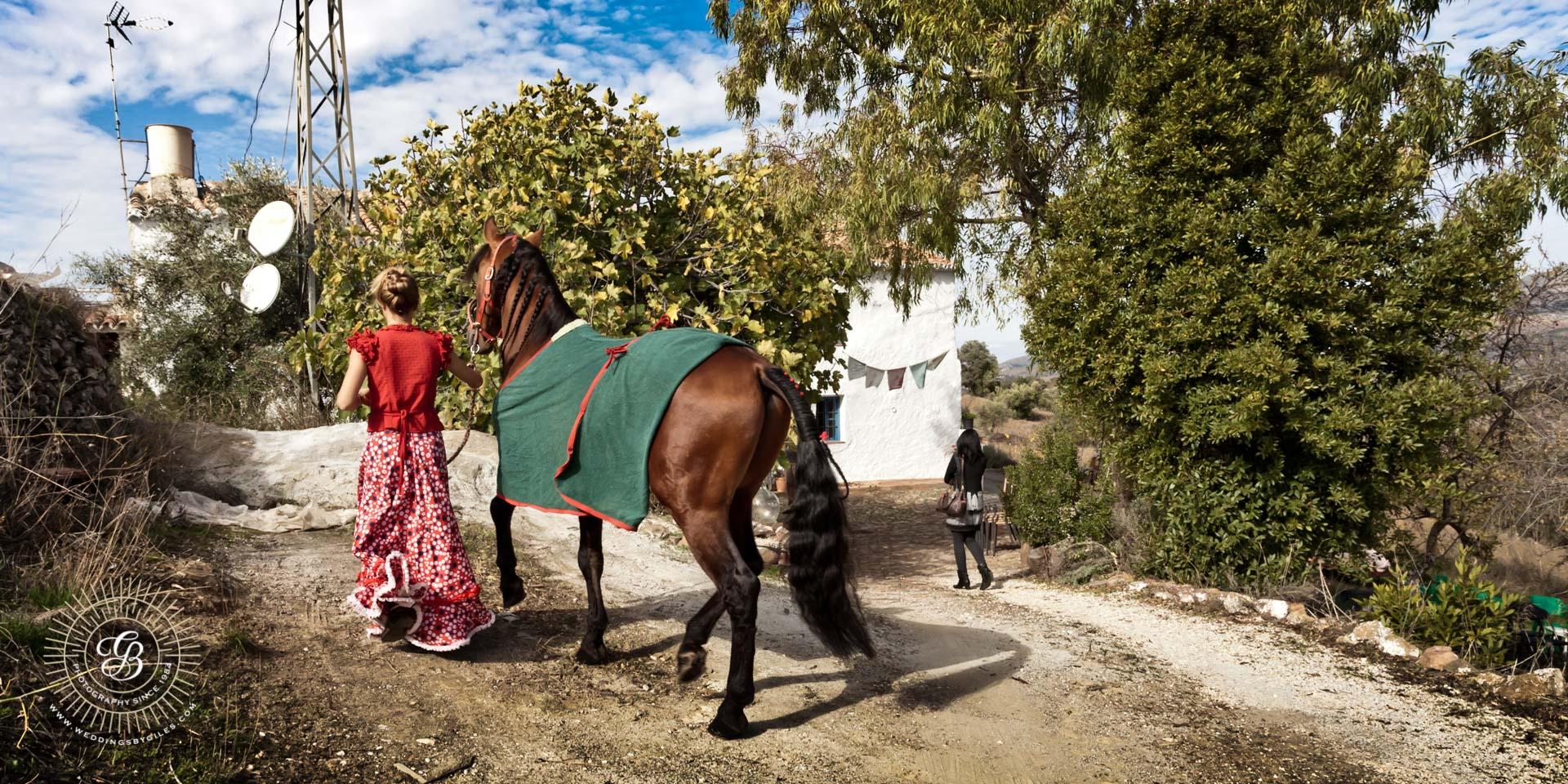 Wedding horse arrives