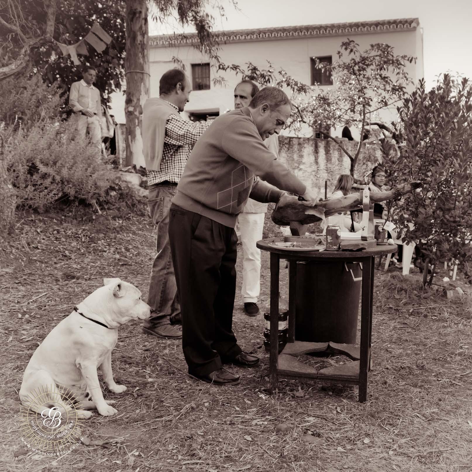 dog watches the Jamon Iberico